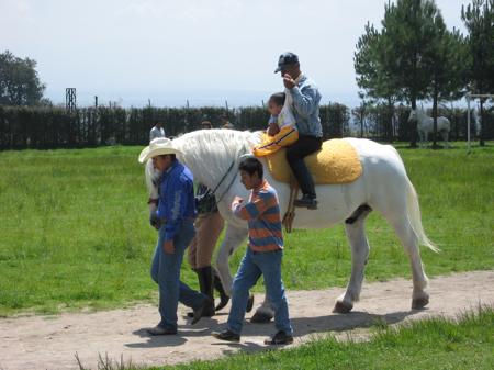 donacion-caballos-03