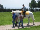 donacion-caballos-ccm-01