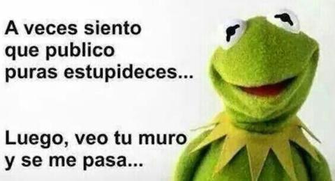 Los memes de la rana René 8