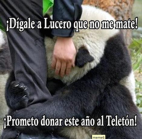 5 mejores memes de #LuceroAsesina