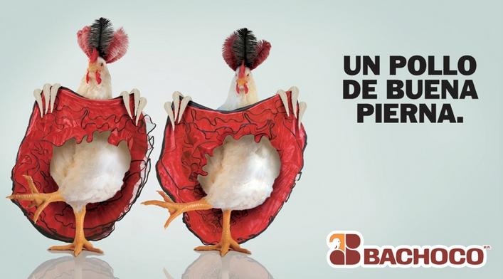 bachoco1