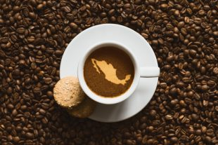 Starbucks llevará café chiapaneco a EUA