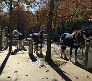 caballopublicidad