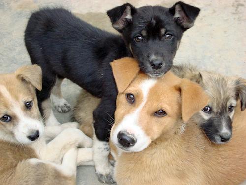Perros_adopción