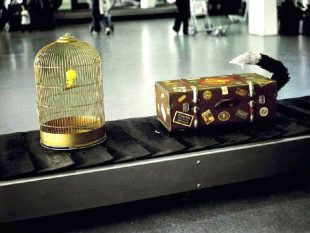 Incremento pasajeros aeropuertos