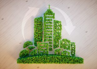ecologia, responsables, medio ambiente