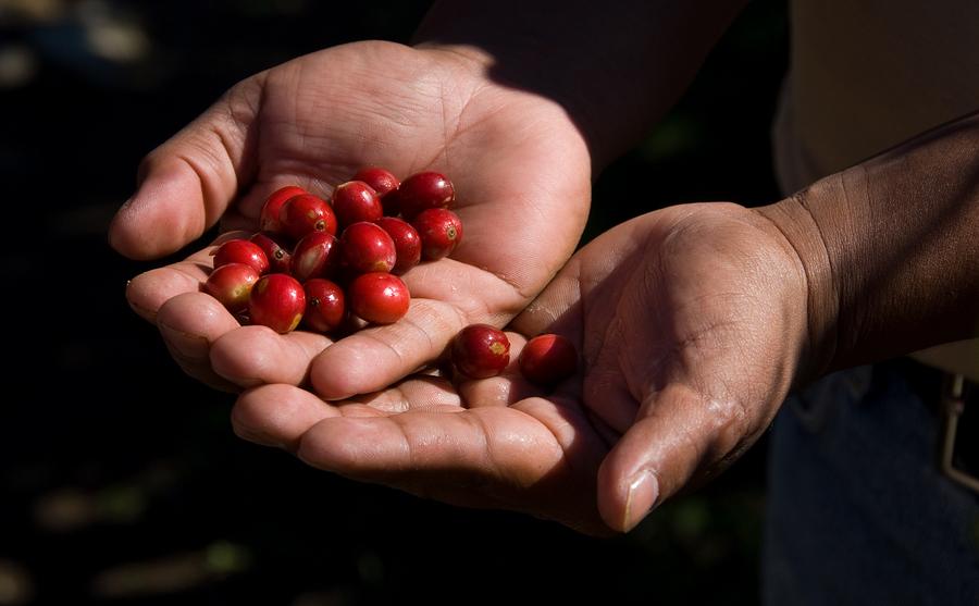 semillas, producción, manos, comida, hambre