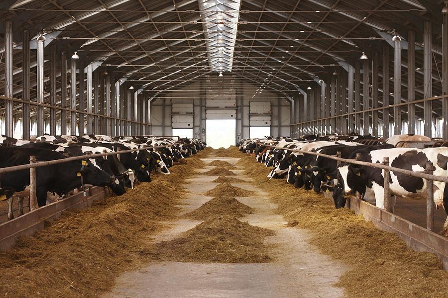 leche, vacas, establo