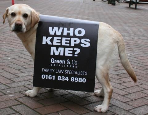 pet-marketing