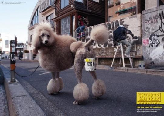 Mascotas ganan guerrilla