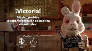 Pruebas cosméticas en animales